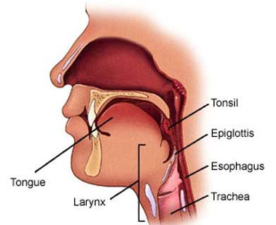 Throat Surgery India,Throat Surgery Cost India, Throat Surgery Treatment Mumbai India